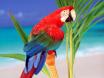 Papagay